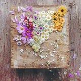 Collage sparso dei fiori immagini stock
