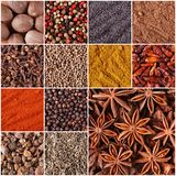 Collage of spices and herbs Stock Images