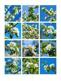 Collage Spring Blossoms 1 Royalty Free Stock Images