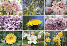 Collage of spring flowers. Collage of pink, yellow and lilac spring flowers stock image