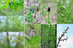 Collage-spring in forest Royalty Free Stock Photo