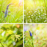 Collage of spring nature backgrounds Royalty Free Stock Photos