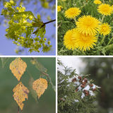 Collage Spring, summer, fall, winter. The seasons of the year royalty free stock images