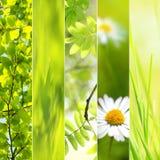 Collage stagionale della sorgente Fotografia Stock