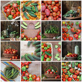 Collage from still lifes with cucumbers and tomatoes. Royalty Free Stock Photos