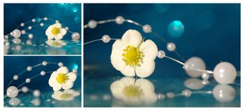 Collage with strawberry flower Royalty Free Stock Images