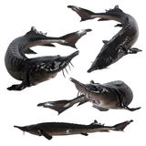 Collage sturgeon fish Royalty Free Stock Photo