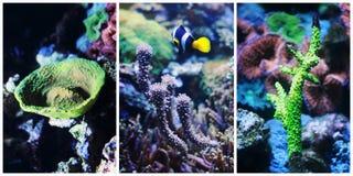 Collage subacuático del paisaje Imagen de archivo