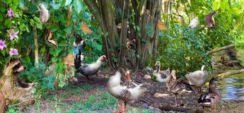Collage surréaliste des animaux communs dans le bois Photographie stock libre de droits