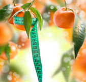 Collage with tangerines. Collage with tangerines and green leaves Stock Photos