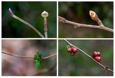 Collage temprano de la primavera Imagen de archivo libre de regalías