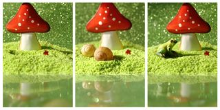 Collage with toadstool, snail shell and frog Royalty Free Stock Images