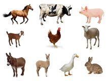 Collage of Top Ten Farm Animals Royalty Free Stock Photo