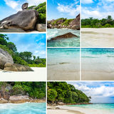 Collage with tropical landscape and background royalty free stock images