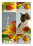 Collage with tulips, cat and porcelain cat Royalty Free Stock Photos