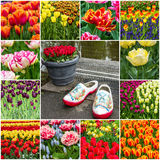 Collage - tulips and Dutch garden shoes in Keukenhof park, Nethe Stock Image
