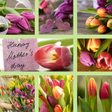 Collage of tulips with mothers day card Royalty Free Stock Image