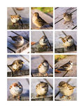Collage Twitting Friends Royalty Free Stock Images