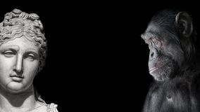Collage of two contrast portraits of Chimpanzee and beautiful Roman woman in stone at black background, details, paste space stock photos