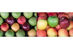 Collage from two photos of four different ripe apples types. Collage from two photos of four different ripe apples types: granny smith, starking, gala and royalty free stock images