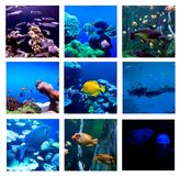 Collage of underwater photos. Collection of tropical fishes Royalty Free Stock Photography
