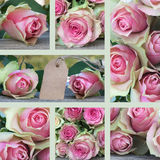 Collage for valentines or mothers day. Collage for Mothers day with pink roses Stock Photos