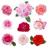 Collage van acht rode rozen Royalty-vrije Stock Afbeelding