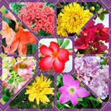 Collage van bloemen Stock Fotografie