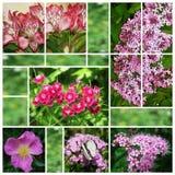 Collage van bloemfoto's Stock Foto