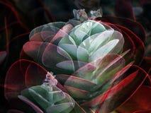 Collage van Cactus Flapjacks Stock Afbeelding