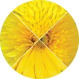 Collage van de gele bloemen van de fragmentenzomer Stock Afbeelding