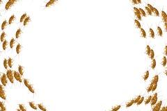 Collage van dode kakkerlakken op witte achtergrond Royalty-vrije Stock Afbeelding