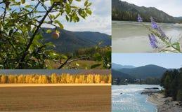 Collage van foto's in Altai worden genomen die Stock Afbeelding