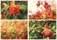 Collage van foto's met een de herfstachtergrond stock foto