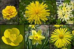 Collage van gele bloemen Royalty-vrije Stock Foto's
