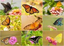Collage van heldere, kleurrijke vlinders Royalty-vrije Stock Afbeelding