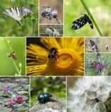 Mengeling van insect en bloemen stock foto's