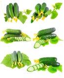 Collage van Komkommers op witte achtergrond. Royalty-vrije Stock Afbeeldingen