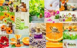 Collage van kruiden en etherische olie Stock Foto's
