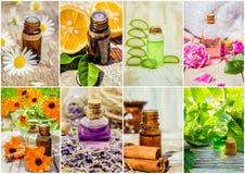 Collage van kruiden en etherische olie Royalty-vrije Stock Afbeeldingen
