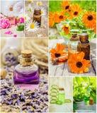 Collage van kruiden en etherische olie Stock Fotografie