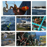 Collage van Maine Stock Fotografie