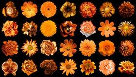 Collage van natuurlijke en surreal oranje bloemen 28 in 1 stock foto's