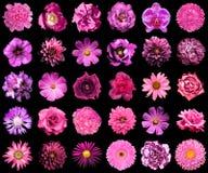Collage van natuurlijke en surreal roze bloemen 30 in 1 royalty-vrije stock afbeeldingen