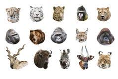 Collage van portretten van wilde zoogdieren royalty-vrije stock afbeeldingen