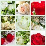 Collage van rozen Stock Fotografie