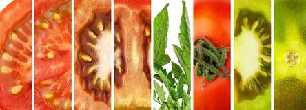 Collage van tomaten Gesneden Tomaten Verse eigengemaakte groenten Voorbereiding van plantaardige salade Vegetarisch voedsel Royalty-vrije Stock Fotografie