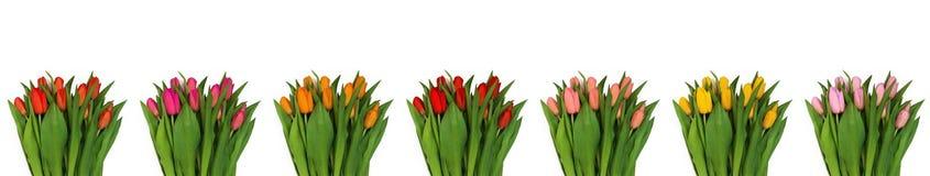 Collage van vele die boeketten van multi-colored tulpen, op wh wordt geïsoleerd stock fotografie