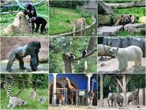 Collage van verschillende dieren Royalty-vrije Stock Foto