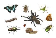 Collage van verschillende insecten op witte achtergrond Royalty-vrije Stock Fotografie